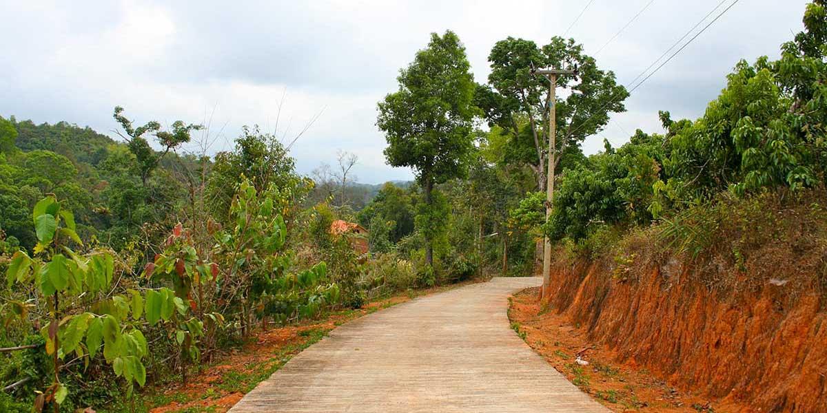 Paradise Mountain Organic Coffee - coffee farm, Thailand
